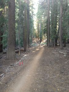 Quite a different course from Nevada City - Smooth and Straight!