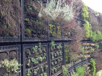 Atlanta Botanical Gardens - edible herbs