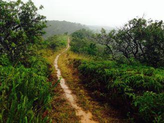 Wet but beautiful trails!