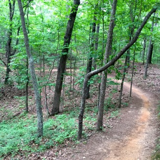 One of my all-time favorite run course: fast, winding singletrack, through the trees and beautiful!