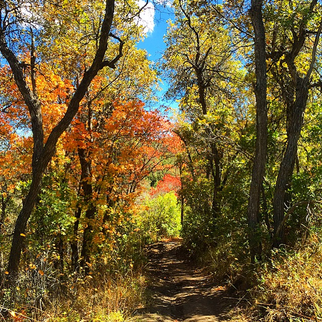 The beautiful trails of Snowbasin in the FALL COLORS!