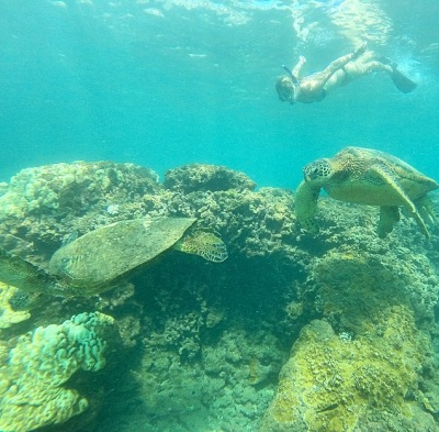 TURTLES!! Always a Maui highlight! Photo by August Teague
