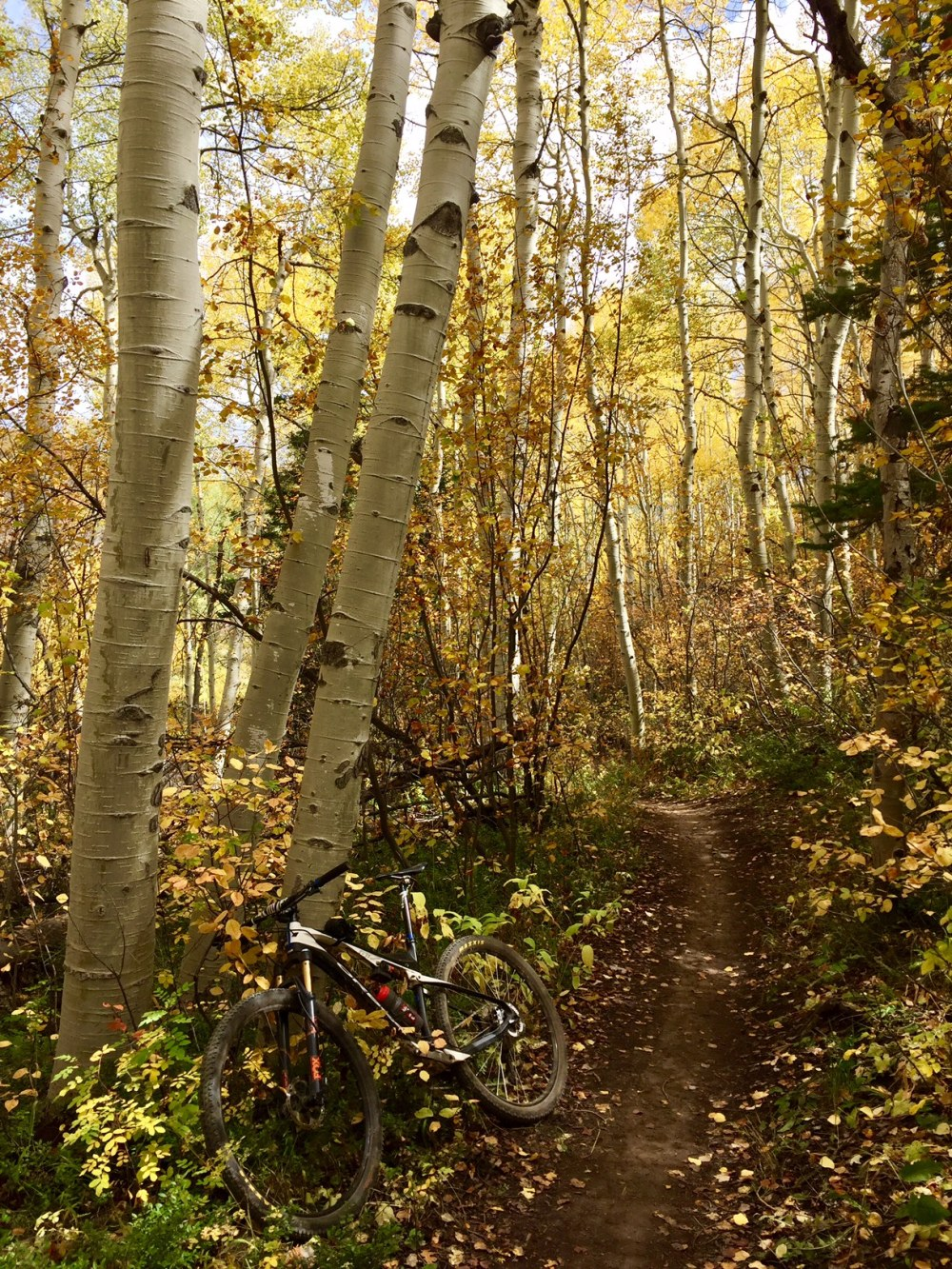 Fall Trail With Bike