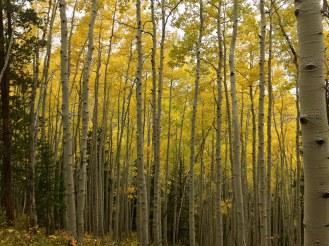Fall Tree Lineup